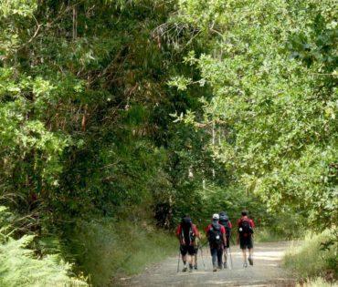 Entre Arzúa y Santiago, manda el bosque